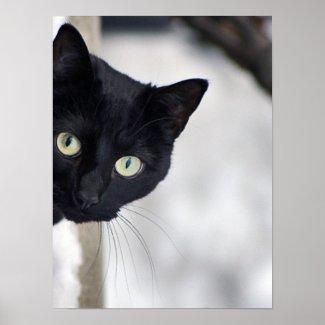 Black Cat print print