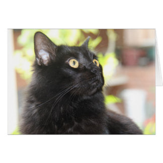Black Cat Profile, bright eyes, blank note cards