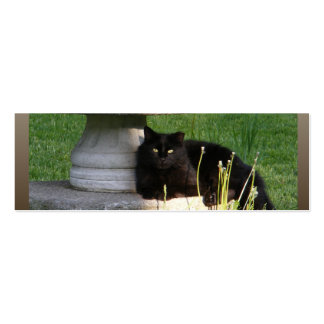 Black Cat ~ profile card Double-Sided Mini Business Cards (Pack Of 20)