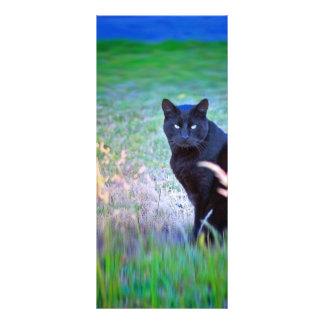 Black Cat Rack Card