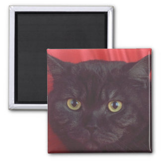 Black Cat - RED 2 Inch Square Magnet