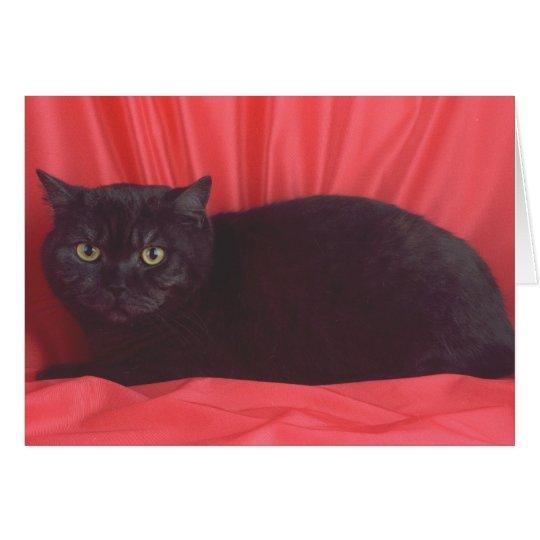 Black Cat - RED Card
