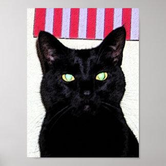 Black Cat / Red White Blue Poster