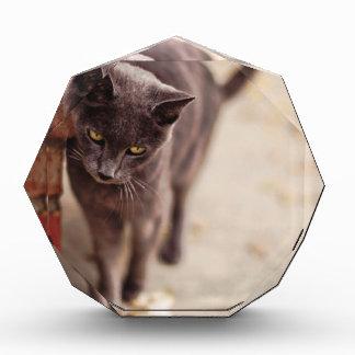 Black Cat Rubs Against A Brick Wall Acrylic Award