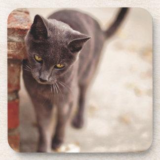 Black Cat Rubs Against A Brick Wall Beverage Coaster