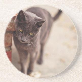 Black Cat Rubs Against A Brick Wall Coaster