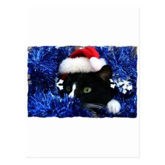 Black Cat, Santa hat, blue tinsel, ready to pounce Postcard
