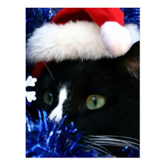 Black Cat, Santa hat, blue tinsel, ready to pounce Postcards