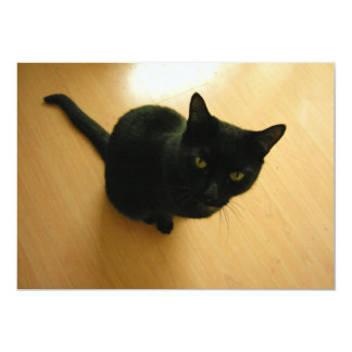 Black Cat Sitting on a Hardwood Floor Card
