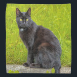 """Black cat sitting outdoor bandana<br><div class=""""desc"""">Black cat sitting outdoor with green grass in the background</div>"""