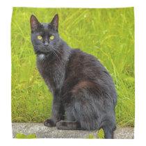 Black cat sitting outdoor bandana