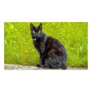 Black cat sitting outdoor business card