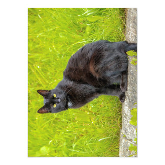 Black cat sitting outdoor card