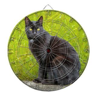 Black cat sitting outdoor dartboard