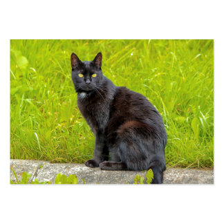 Black cat sitting outdoor large business card