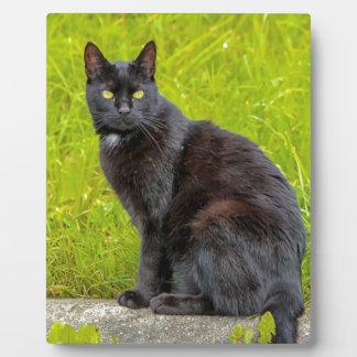 Black cat sitting outdoor plaque