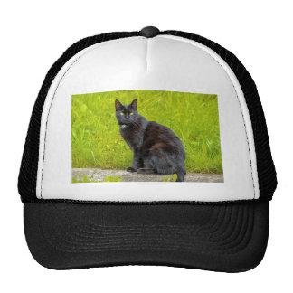 Black cat sitting outdoor trucker hat