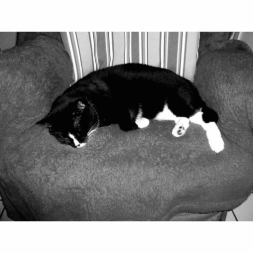 black cat sleeping on chair bw photo standing photo sculpture