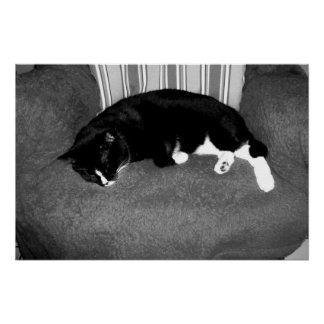 black cat sleeping on chair bw photo posters