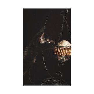 Black Cat Smells Baby Chinchilla Gallery Wrap Canvas