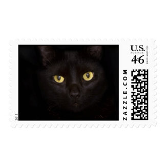 Black Cat Stamp
