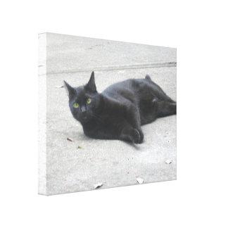 Black  Cat Stretched Canvas Print