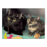 Black Cat/Tortoiseshell Kitten Greeting/Note Cards