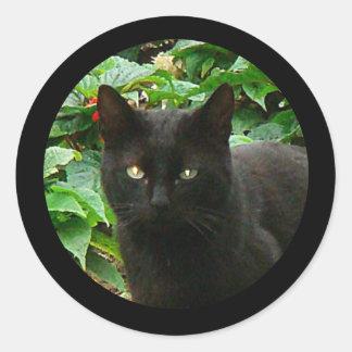 Black Cat Watching Classic Round Sticker