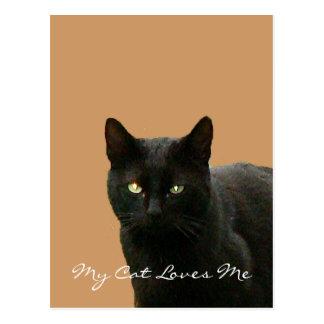 Black Cat Watching Postcard