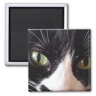 Black Cat, White Whiskers, Green Eyes 2 Inch Square Magnet