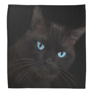 Black cat with blue eyes bandanas