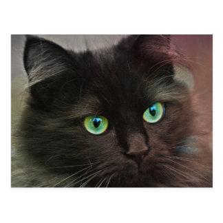 Black cat with green eyes portrait postcard