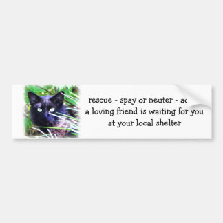 Black cat with striking green eyes car bumper sticker