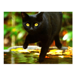 Black Cat With Striking Yellow Eyes Post Cards