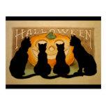 Black Cats and a Jack O'Lantern Postcard
