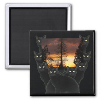 Black Cats and Sunset Magnets