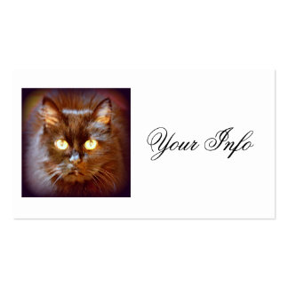 black cats business card