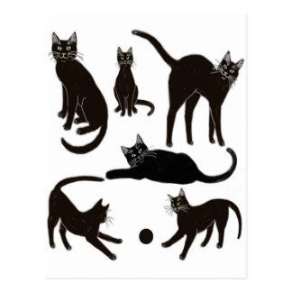 Black Cats Postcard