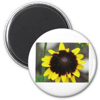 black center rudbeckia magnet