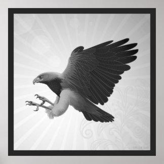 Black chested Eagle buzzard Poster