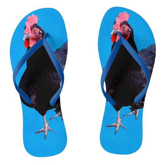 50d93d58ef14 Black Chicken On Blue
