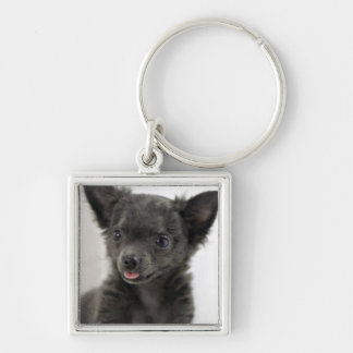 Black Chihuahua  Keychain