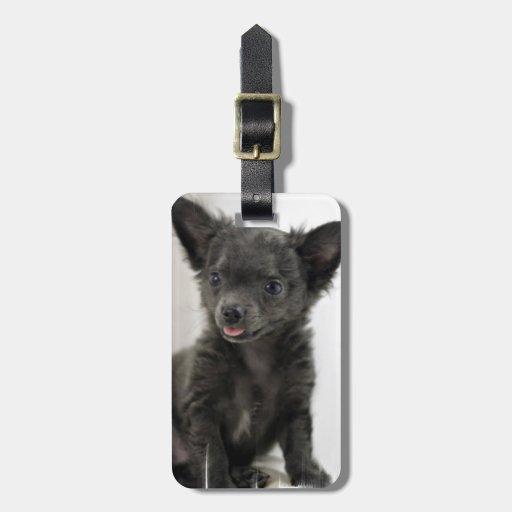 Black Chihuahua  Luggage Tag