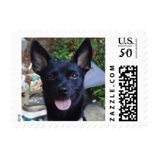 BLACK CHIHUAHUA.....MISSING YOU! POSTAGE