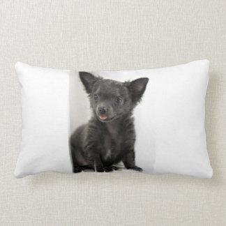 Black Chihuahua  Pillow