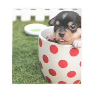 Black chihuahua puppy in a red spotty cup notepad