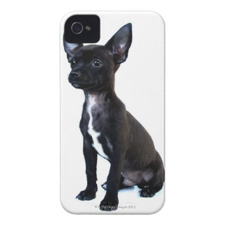 Black Chihuahua puppy iPhone 4 Cover