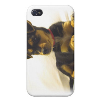 Black Chihuahua Puppy iPhone Case iPhone 4 Case