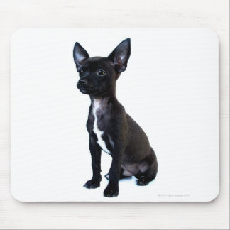 Black Chihuahua puppy Mouse Pad