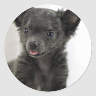 Black Chihuahua  Stickers